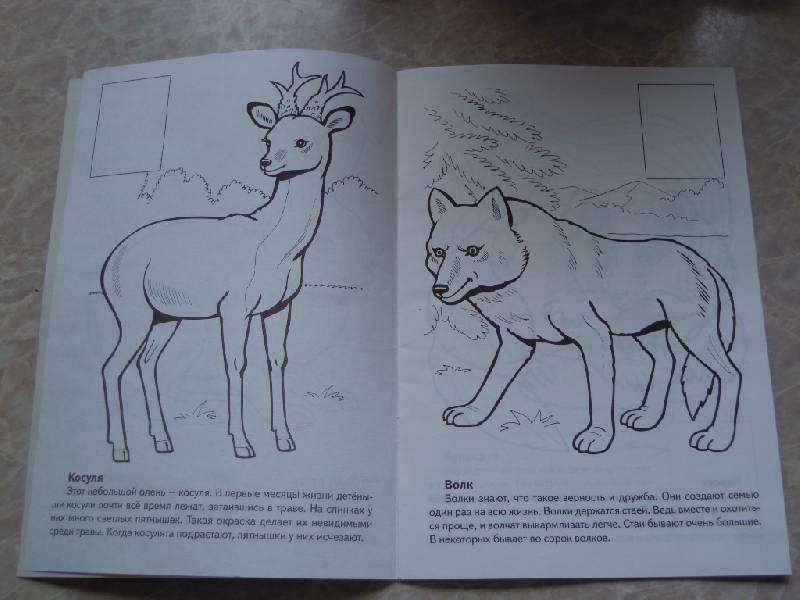 может рисунки животных которые занесены в красную книгу россии тамада