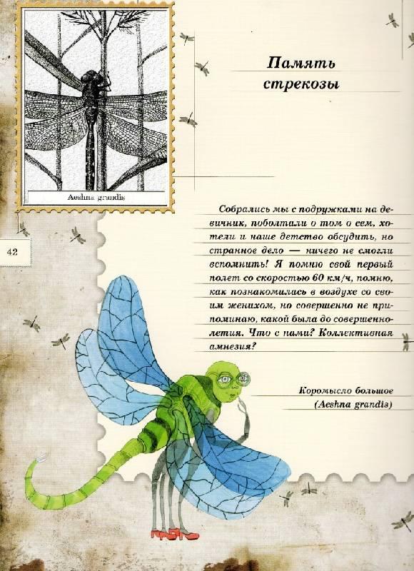 Иллюстрация 103 из 106 для Письма насекомых - Ольга Кувыкина   Лабиринт - книги. Источник: Zhanna