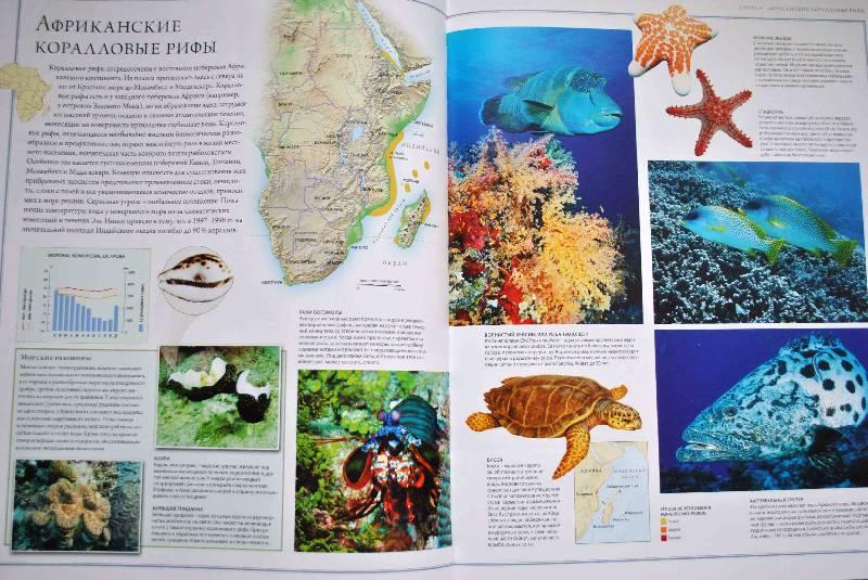 Иллюстрация 52 из 88 для Животный мир. Иллюстрированный атлас - Бамбарадения, Вудрафф, Гинзберг | Лабиринт - книги. Источник: Тамар@
