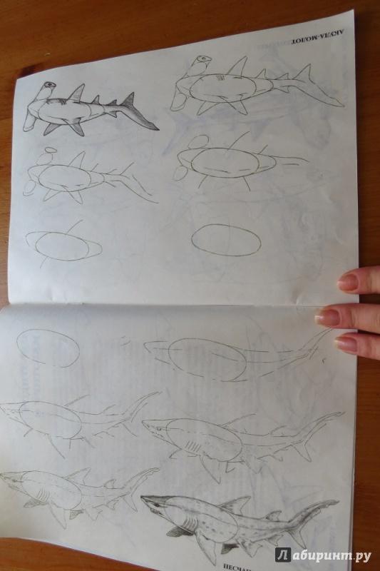 Иллюстрация 3 из 29 для Рисуем 50 акул, китов и других морских животных - Эймис, Бадд | Лабиринт - книги. Источник: Жар птица