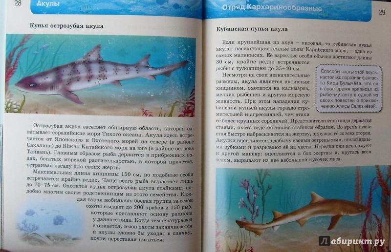 Иллюстрация 18 из 37 для Акулы | Лабиринт - книги. Источник: Соловьев  Владимир