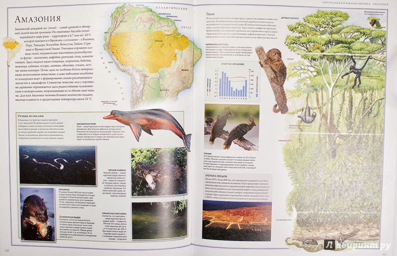 Иллюстрация 12 из 88 для Животный мир. Иллюстрированный атлас - Бамбарадения, Вудрафф, Гинзберг | Лабиринт - книги. Источник: AlexYustas