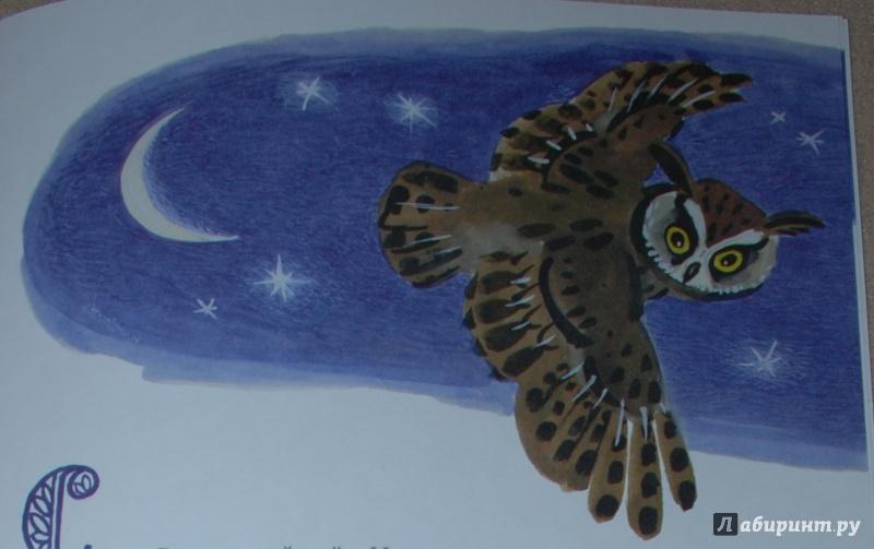 Иллюстрация 33 из 36 для Сова - Виталий Бианки | Лабиринт - книги. Источник: Книжный кот