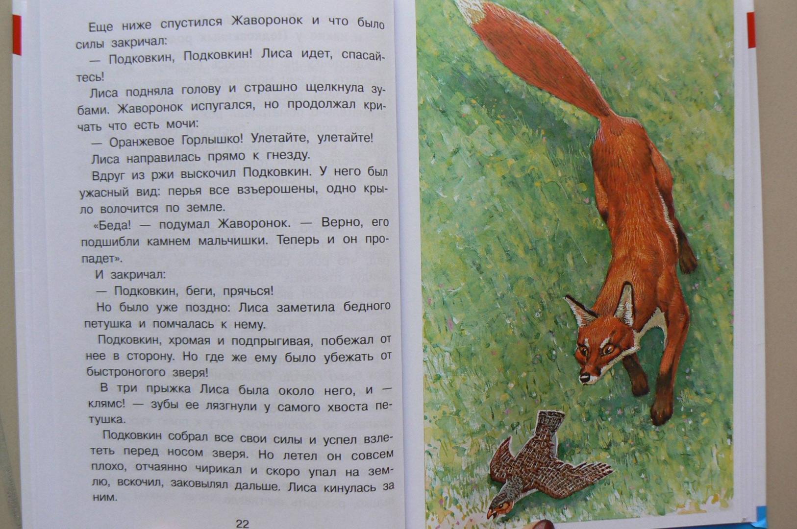 Иллюстрация 19 из 25 для Тайна ночного леса - Виталий Бианки   Лабиринт - книги. Источник: Лидия