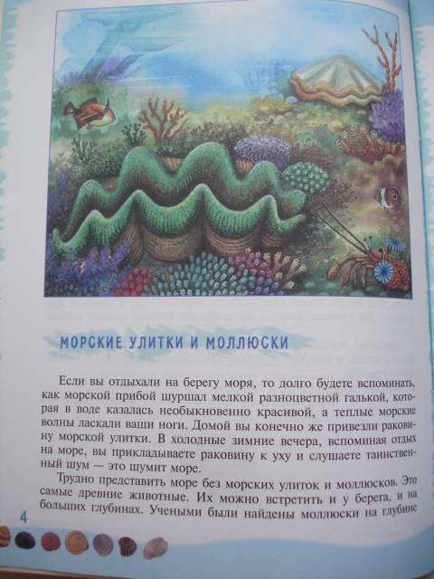 Иллюстрация 28 из 39 для Тайны морского дна: книга для чтения детям - Геннадий Целищев | Лабиринт - книги. Источник: Осьминожка