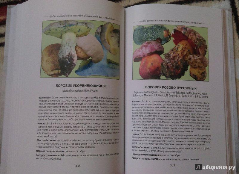 Иллюстрация 7 из 18 для Ядовитые грибы России - Михаил Вишневский | Лабиринт - книги. Источник: Попов  Андрей