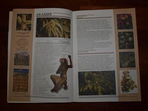Иллюстрация 1 из 5 для Все о растениях в легендах и мифах - Рой Маккалистер | Лабиринт - книги. Источник: Наталья Бухтиярова