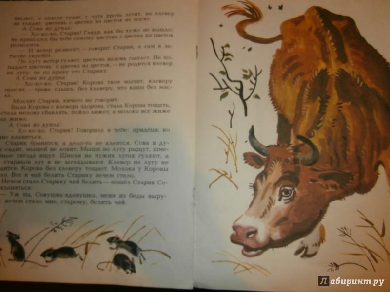 Иллюстрация 8 из 36 для Сова - Виталий Бианки | Лабиринт - книги. Источник: Tiger.