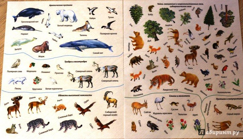 пробковая картинки животных и растений природных зон планирую развить эту