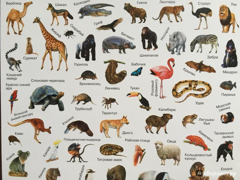 все животные мира список фото черного белого