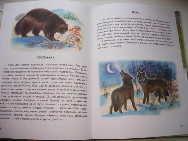Иллюстрация 25 из 41 для Азбука живой природы - Александр Барков | Лабиринт - книги. Источник: Осьминожка