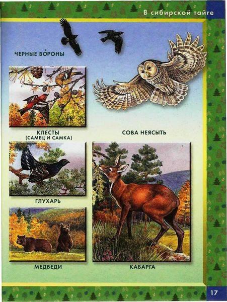 Иллюстрация 7 из 22 для Большая книга животных: Словарь в картинках | Лабиринт - книги. Источник: Юта