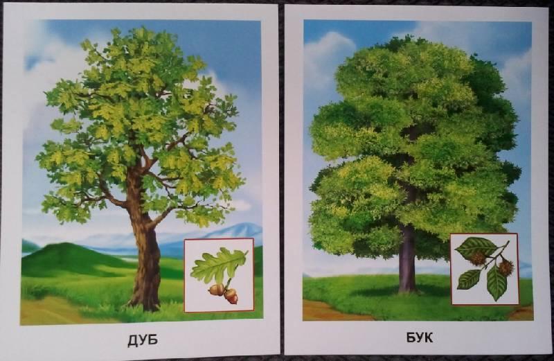 деревья в картинках их сборка кератиновое выпрямление