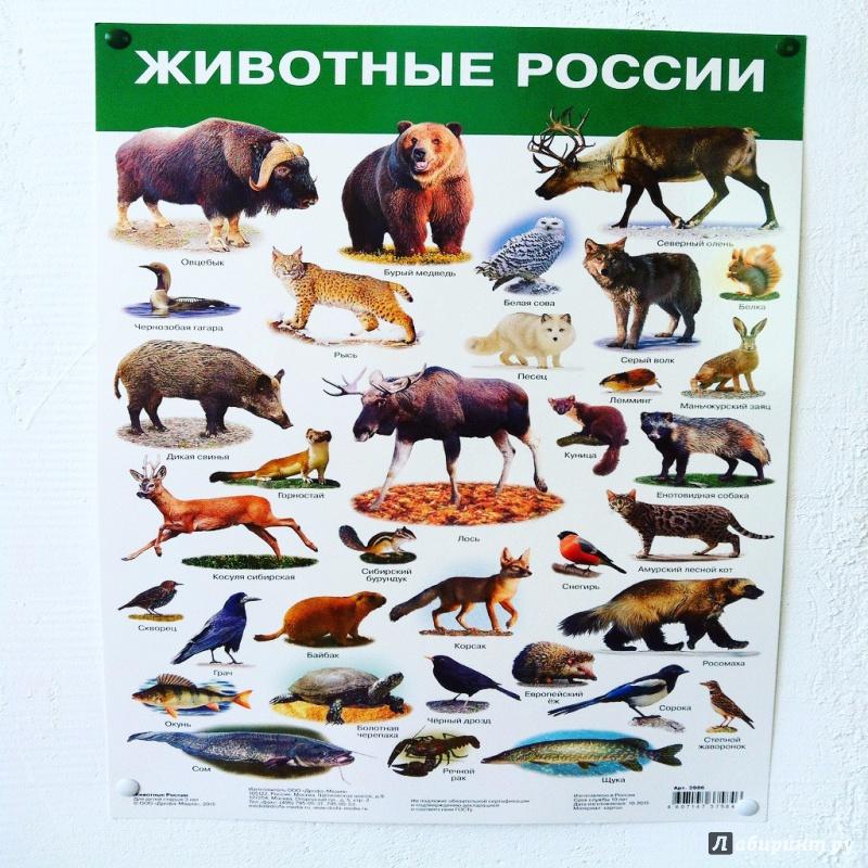 Картинки животных россии на карте