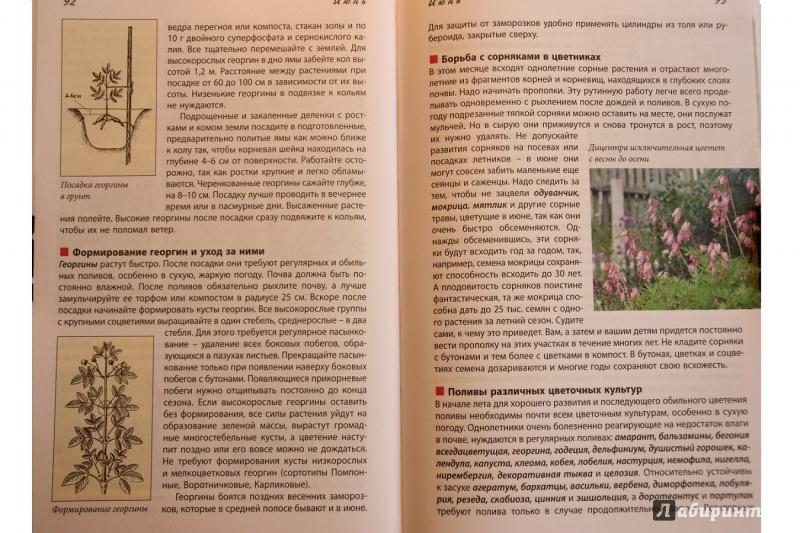 Иллюстрация 8 из 17 для Новый календарь цветовода - Луиза Китаева | Лабиринт - книги. Источник: С  Т
