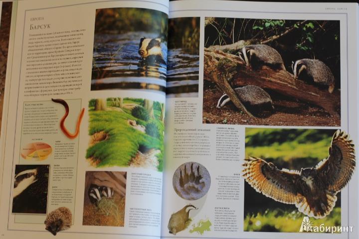 Иллюстрация 73 из 84 для Животный мир. Иллюстрированный атлас - Бамбарадения, Вудрафф, Гинзберг | Лабиринт - книги. Источник: LittleDragon