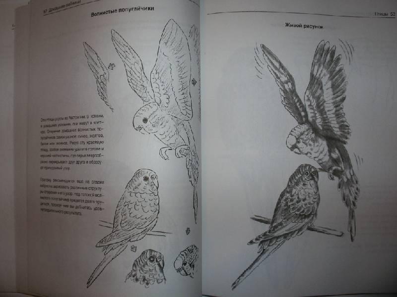 Иллюстрация 14 из 21 для Рисуем животных - Вальтер Хальбингер   Лабиринт - книги. Источник: Tiger.