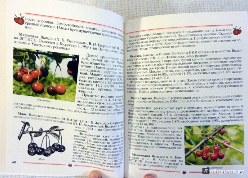 Иллюстрация 29 из 33 для Вишня, черешня. Пособие для садоводов-любителей - Еремина, Юшев | Лабиринт - книги. Источник: WhiteRacoon