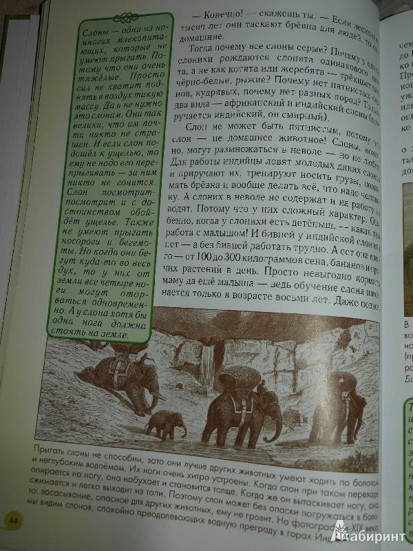 Иллюстрация 33 из 52 для Домашние животные - Светлана Лаврова | Лабиринт - книги. Источник: Ded Sergej