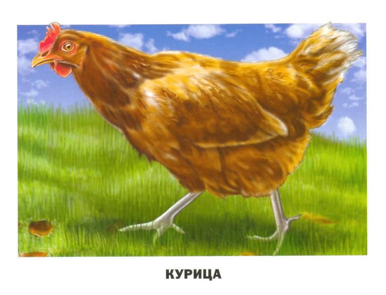 картинки домашних животных и птиц придает