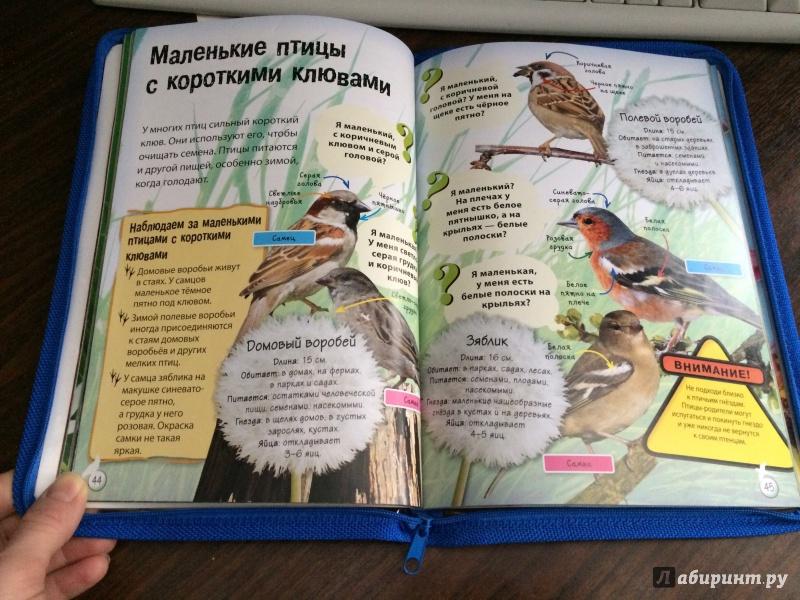 Иллюстрация 3 из 19 для Живая природа. Звери, птицы, животные и растения вокруг нас - Терри Дженнингс   Лабиринт - книги. Источник: Mrs.Paprika