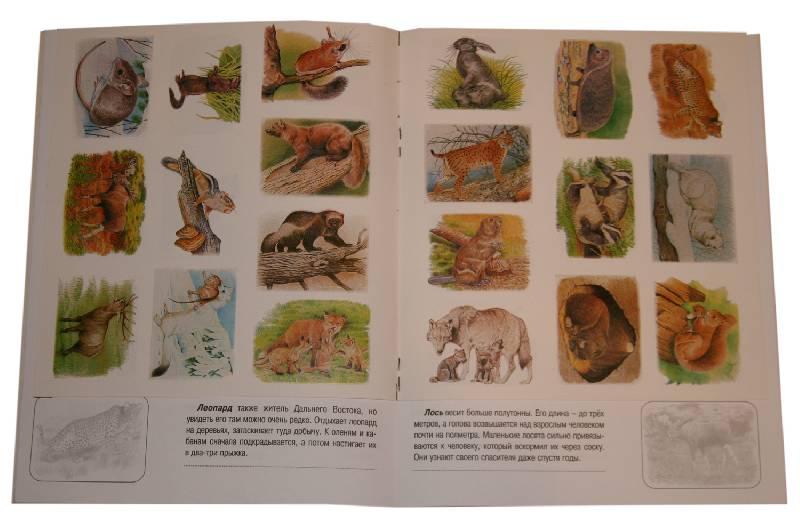 Иллюстрация 3 из 12 для Животные русского леса. Книжка с наклейками | Лабиринт - книги. Источник: *Мария*