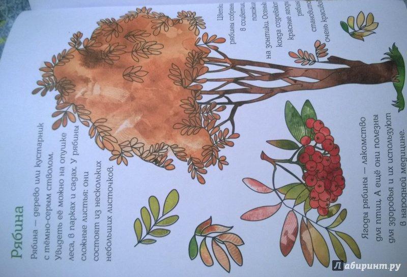 Иллюстрация 15 из 28 для Мой первый гербарий. Цветы и листья. ФГОС | Лабиринт - книги. Источник: kokorka