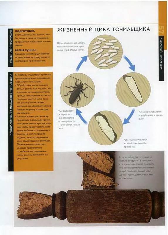 Иллюстрация 10 из 38 для Отделка древесины. Иллюстрированное руководство - Мик Аллен | Лабиринт - книги. Источник: Ялина