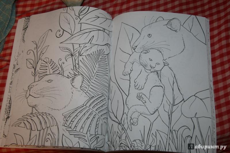 Иллюстрация 24 из 44 для Фантастические кошки. Раскраска ...