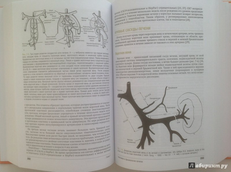 Иллюстрация 18 из 28 для Введение в гепатологию - Шифф, Соррел, Мэддрей   Лабиринт - книги. Источник: Sunnygirl