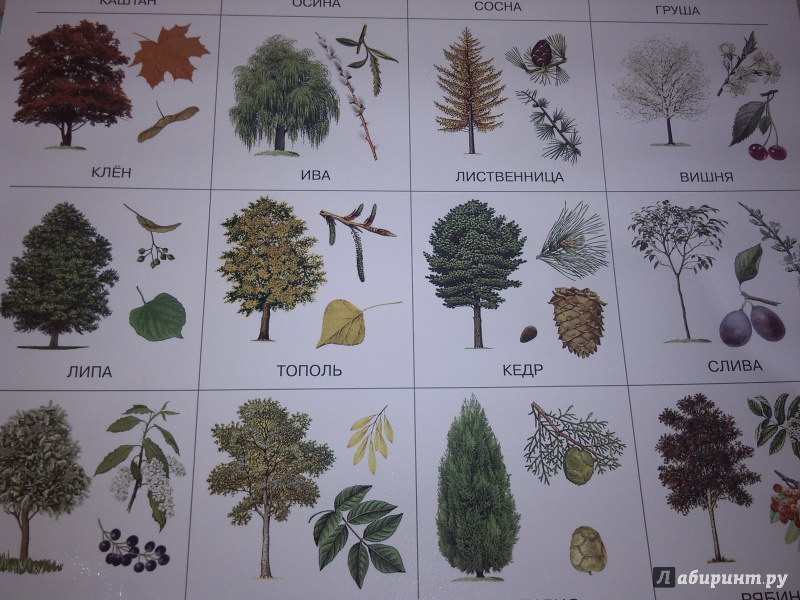 разные виды деревьев картинки шведские замки