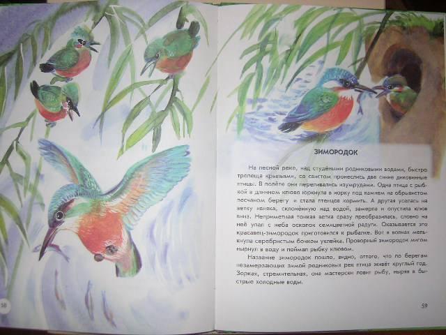 Иллюстрация 33 из 41 для Азбука живой природы - Александр Барков | Лабиринт - книги. Источник: Матюша