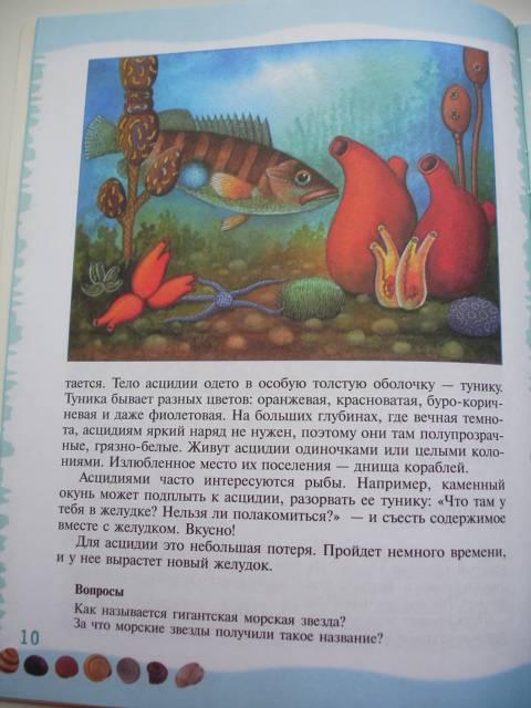 Иллюстрация 34 из 39 для Тайны морского дна: книга для чтения детям - Геннадий Целищев | Лабиринт - книги. Источник: Осьминожка