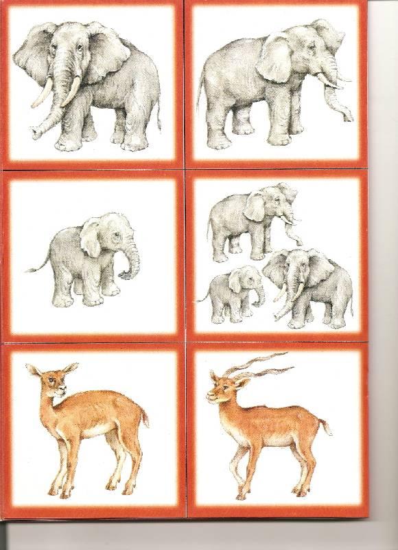 Картинки семей животных с названиями