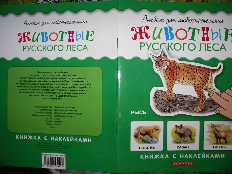 Иллюстрация 6 из 12 для Животные русского леса. Книжка с наклейками   Лабиринт - книги. Источник: Tiger.