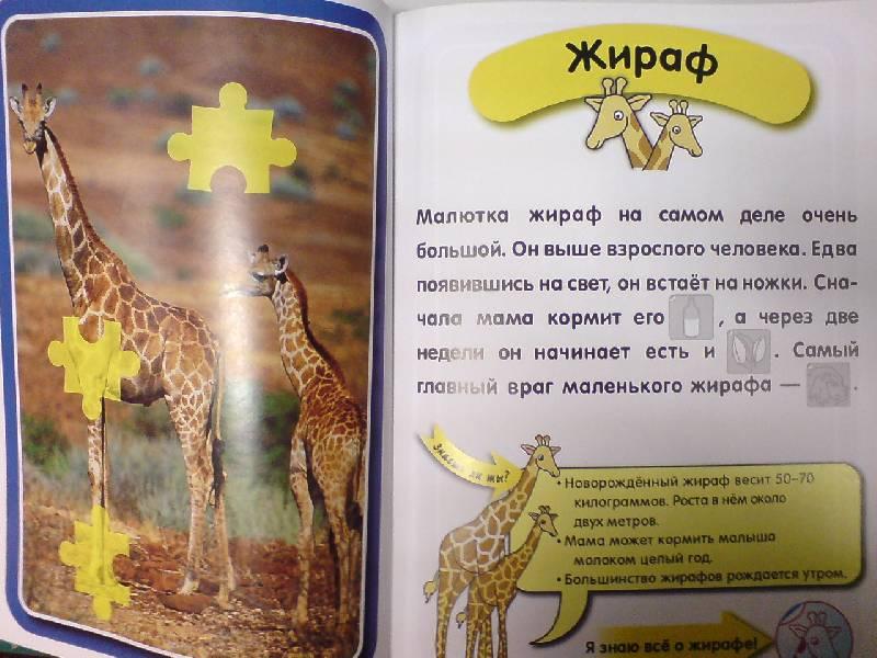 Иллюстрация 1 из 19 для Я знаю все о детишках животных   Лабиринт - книги. Источник: Настёна