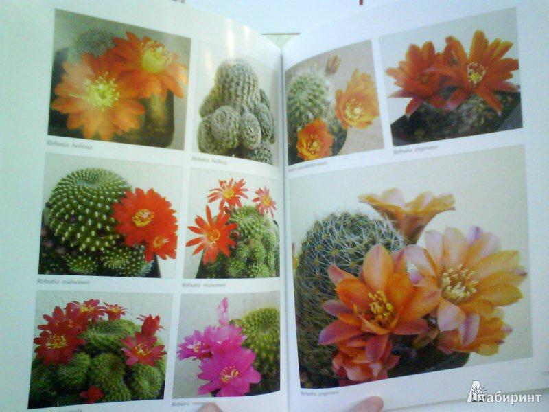 Иллюстрация 4 из 4 для Мои кактусы: Руководство по уходу за кактусами и другими суккулентами для всех любителей растений - Хельга Мозес | Лабиринт - книги. Источник: Мила