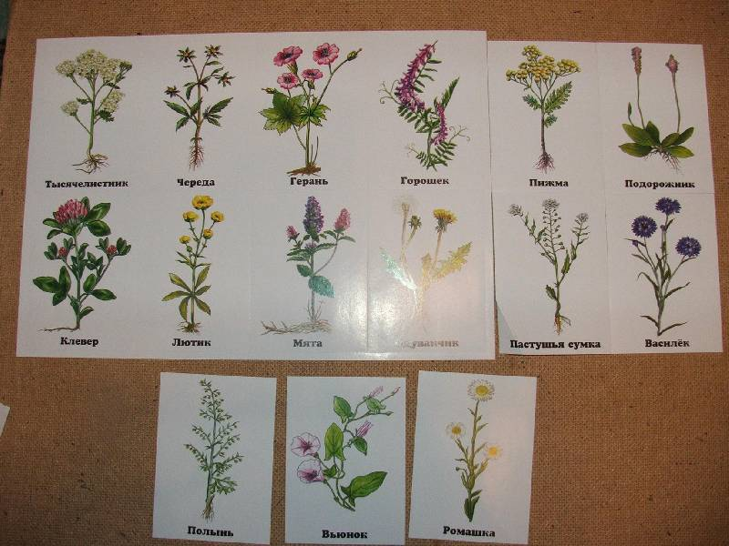 Полевые растения список фото