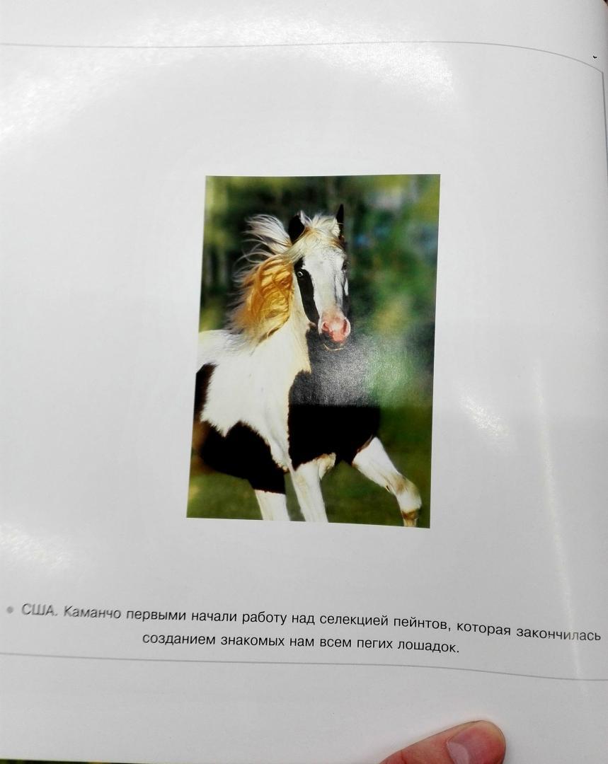 Иллюстрация 6 из 25 для Лошади. Самые лучшие фотографии | Лабиринт - книги. Источник: Сафиулина  Юлия