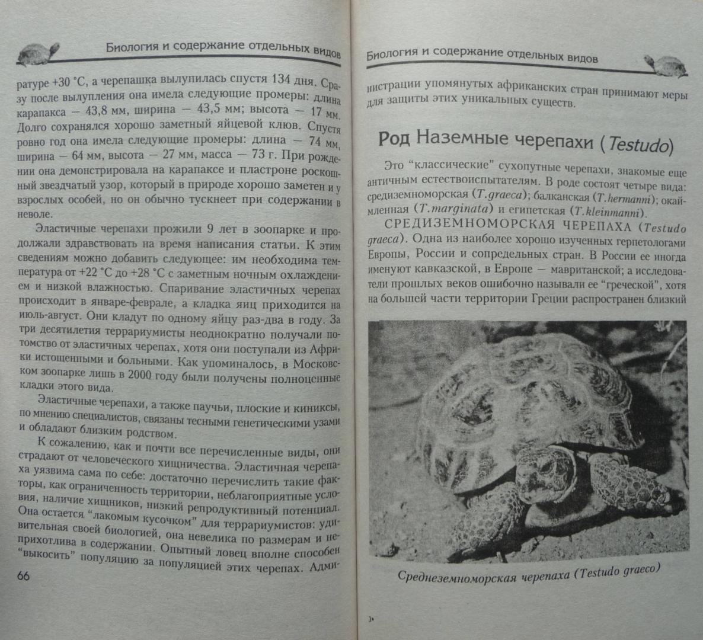 Иллюстрация 13 из 17 для Сухопутные черепахи. Содержание. Разведение. Кормление. Лечение заболеваний - Александр Чегодаев | Лабиринт - книги. Источник: SiB