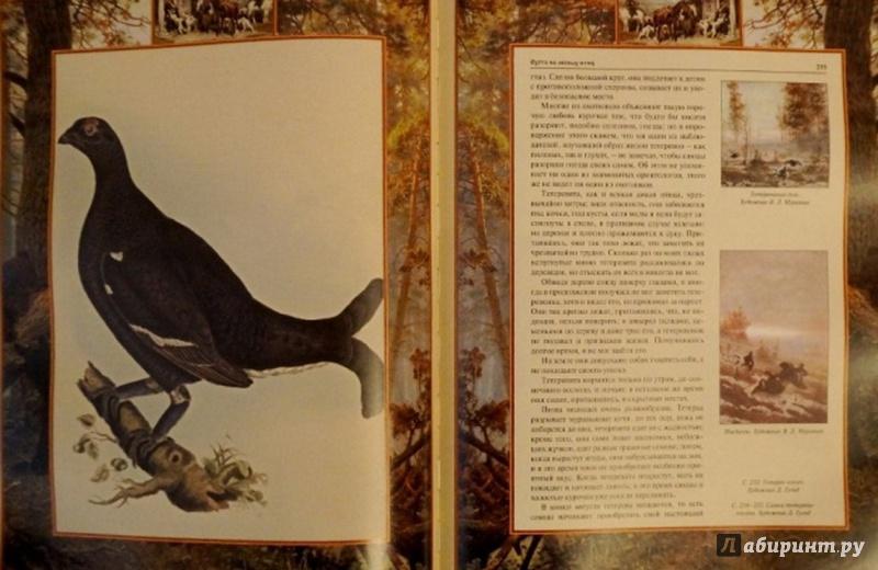 Иллюстрация 8 из 9 для Русская охота - Владимир Бутромеев | Лабиринт - книги. Источник: Елизовета Савинова