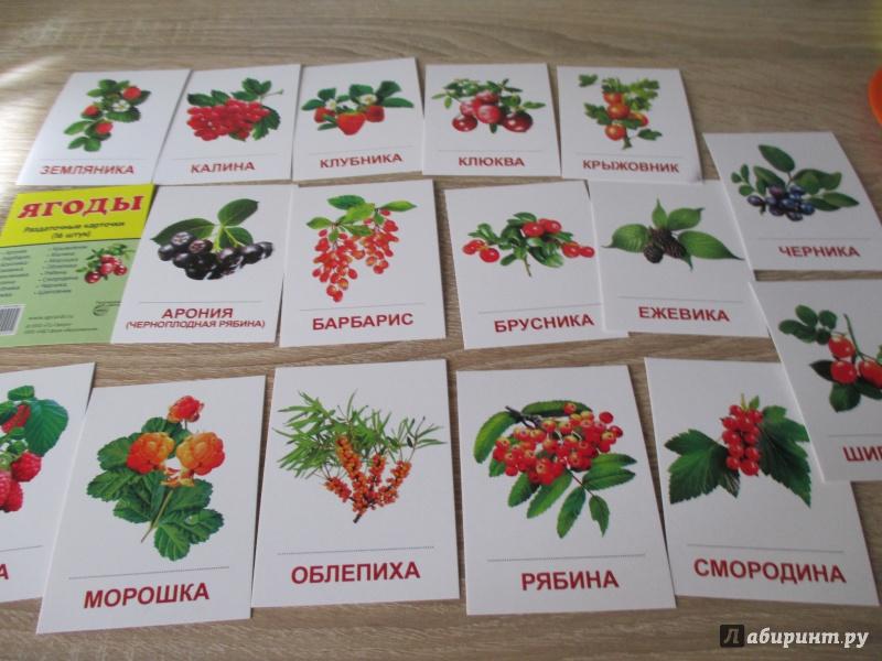 виды ягод фото и название стоит