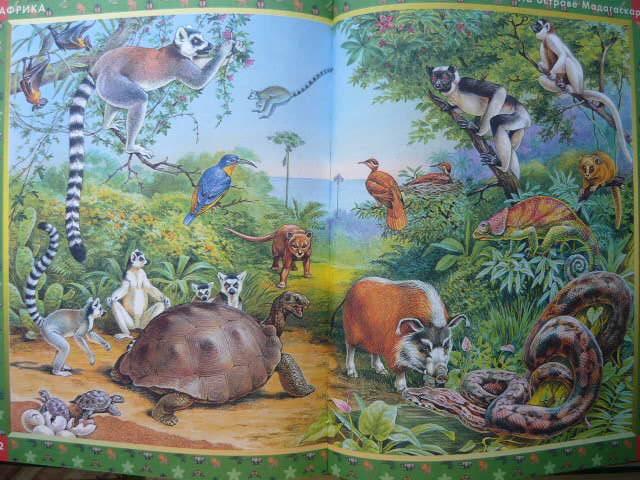 Иллюстрация 19 из 22 для Большая книга животных: Словарь в картинках   Лабиринт - книги. Источник: Катерина М.