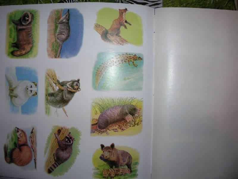 Иллюстрация 8 из 12 для Животные русского леса. Книжка с наклейками | Лабиринт - книги. Источник: Tiger.