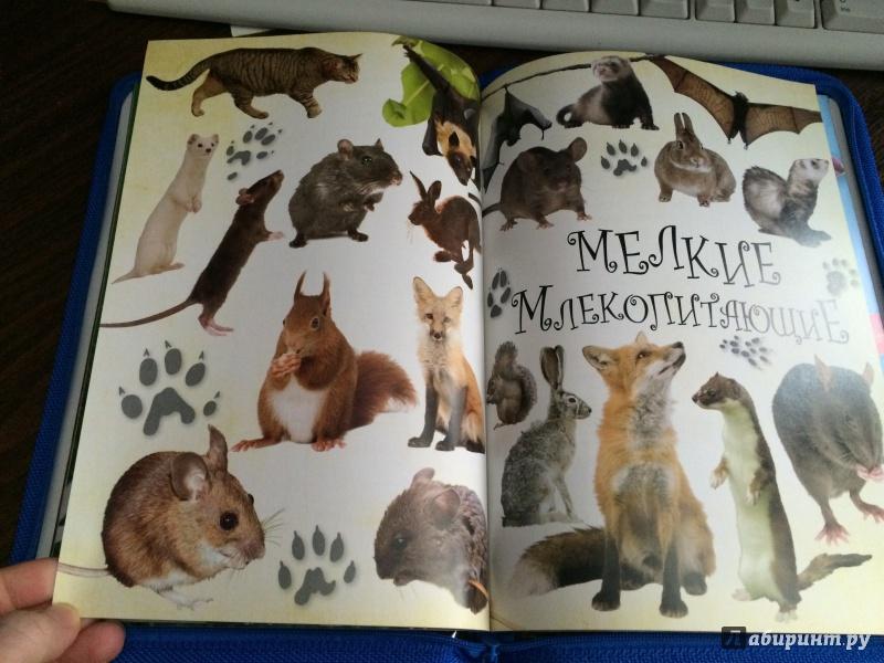 Иллюстрация 4 из 19 для Живая природа. Звери, птицы, животные и растения вокруг нас - Терри Дженнингс | Лабиринт - книги. Источник: Mrs.Paprika