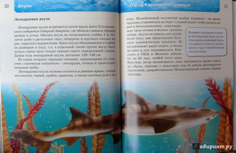 Иллюстрация 19 из 37 для Акулы | Лабиринт - книги. Источник: Соловьев  Владимир