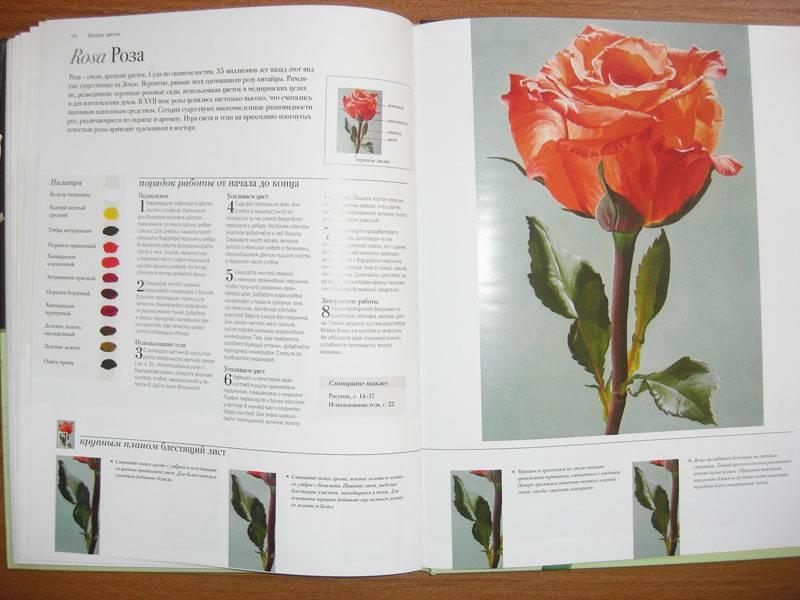 Иллюстрация 20 из 20 для Акриловая живопись. Рисуем цветы - Лекси Санделл | Лабиринт - книги. Источник: Gradara