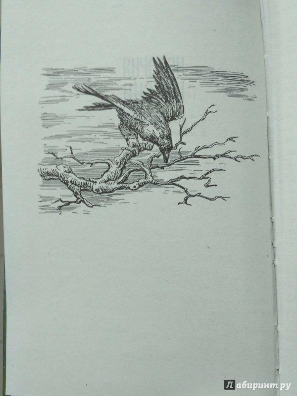 Иллюстрация 3 из 13 для Корень зла - Петр Полевой   Лабиринт - книги. Источник: Вик