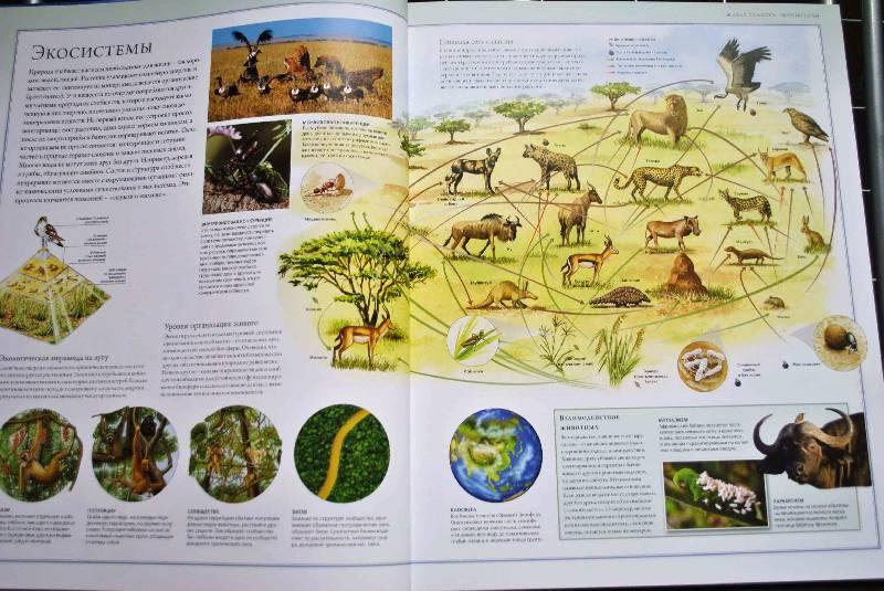 Иллюстрация 43 из 88 для Животный мир. Иллюстрированный атлас - Бамбарадения, Вудрафф, Гинзберг   Лабиринт - книги. Источник: Тамар@