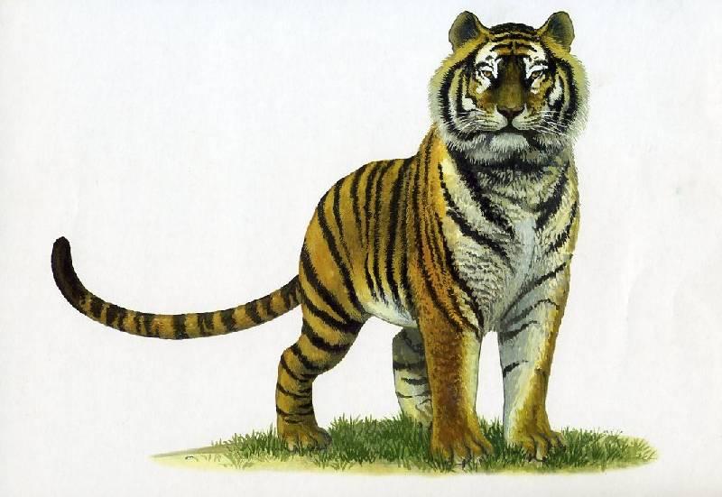 Картинки с изображением животных жарких стран для детей